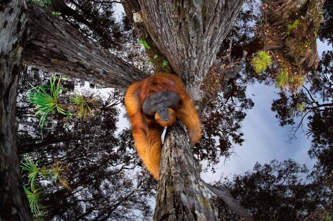 Những hình ảnh ấn tượng trong Giải thưởng nhiếp ảnh quốc tế Siena 2020 -6