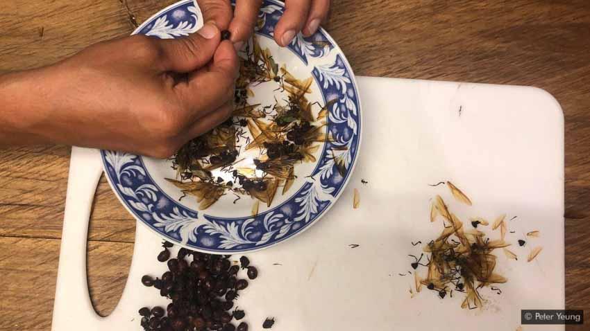 Lạ lùng món kiến mông to của người Colombia -2