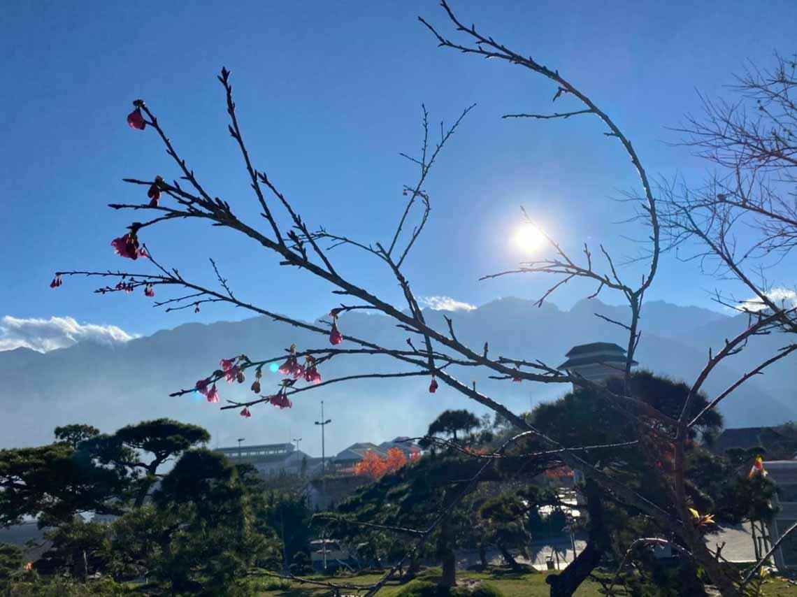 Hoa anh đào Nhật đang khoe sắc tuyệt đẹp tại 'thành phố mây ngàn' -8