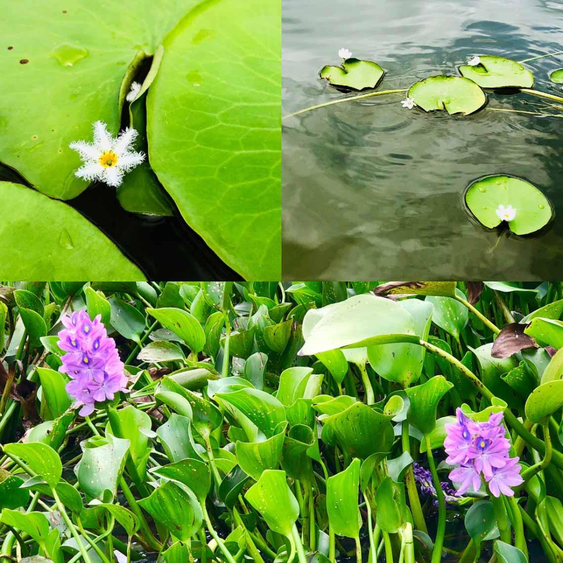 Hồ Lăk – dải lụa óng mềm của đất rừng Tây Nguyên - 25