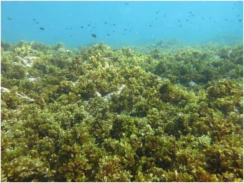 Suy thoái môi trường khiến loài người đối diện 'tương lai kinh khủng của đại tuyệt chủng' - 2