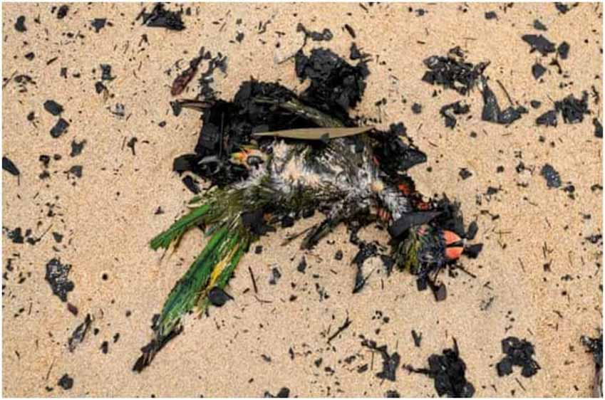 Suy thoái môi trường khiến loài người đối diện 'tương lai kinh khủng của đại tuyệt chủng' - 3