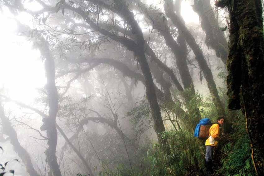 Chinh phục Fansipan trong sương mù - 1