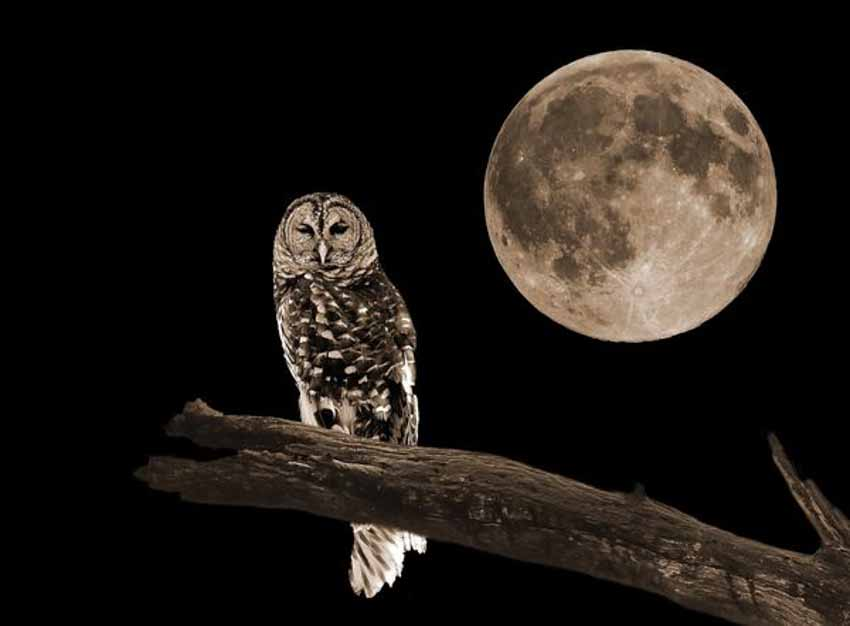Ánh trăng ảnh hưởng đến động, thực vật như thế nào? - 1
