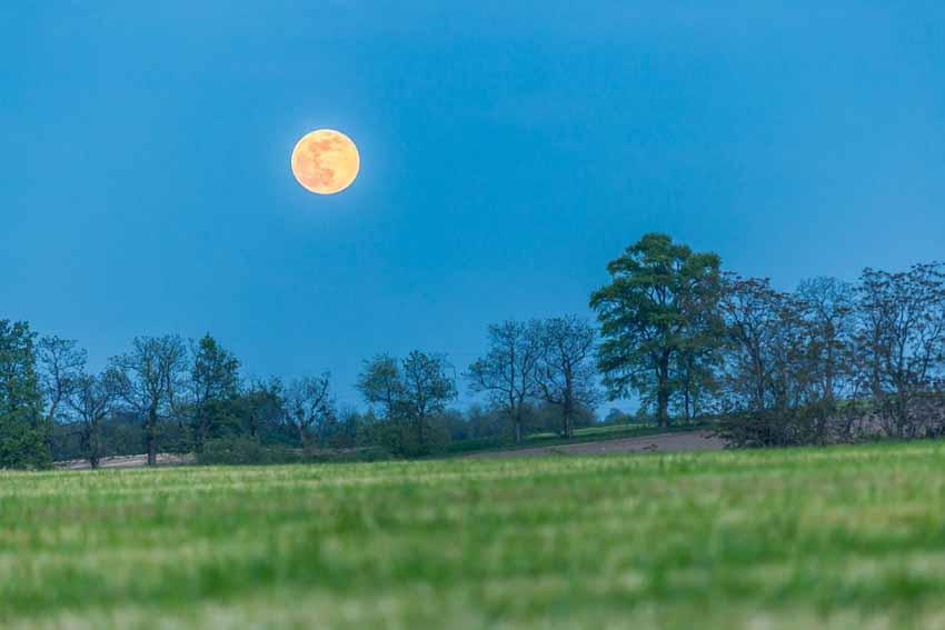 Ánh trăng ảnh hưởng đến động, thực vật như thế nào? - 2