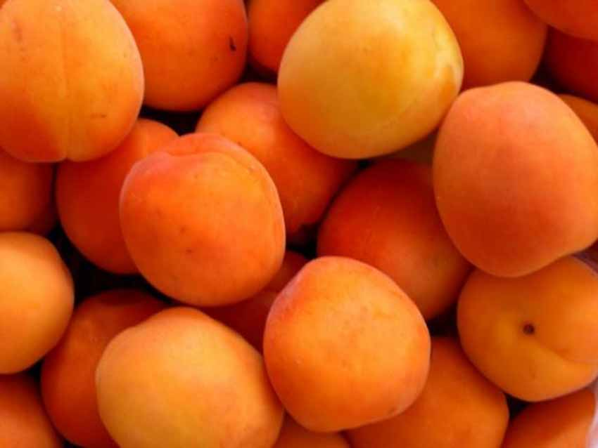 Giai thoại thú vị về các trái cây - 4