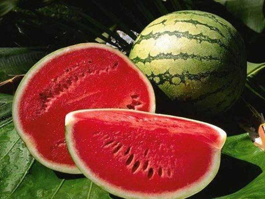 Giai thoại thú vị về các trái cây - 11