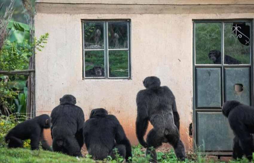Những điều ít biết trong thế giới động vật - 3