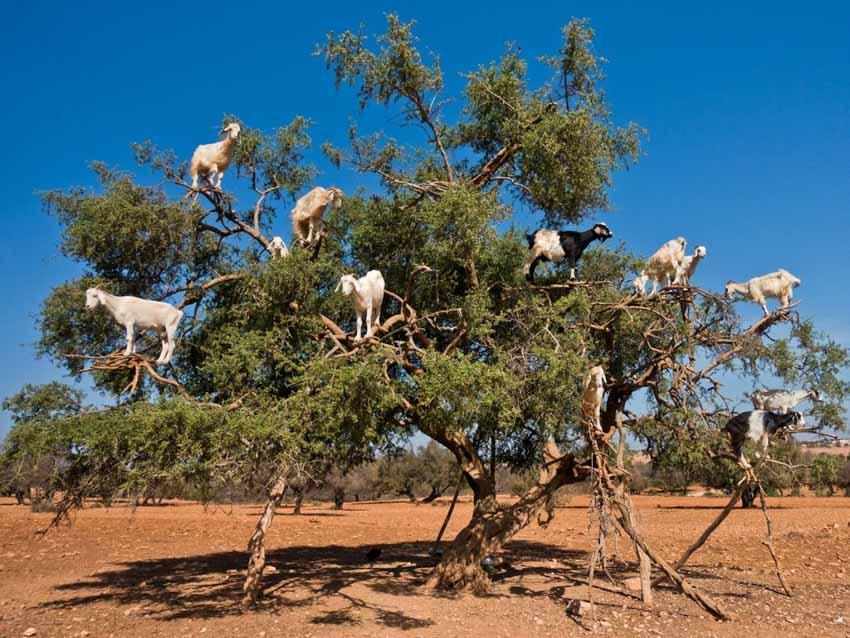 Những điều ít biết trong thế giới động vật - 5