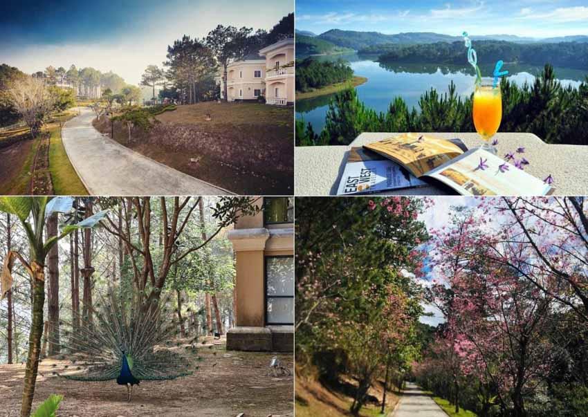 6 khách sạn đẹp ở Đà Lạt níu chân du khách thập phương - 10