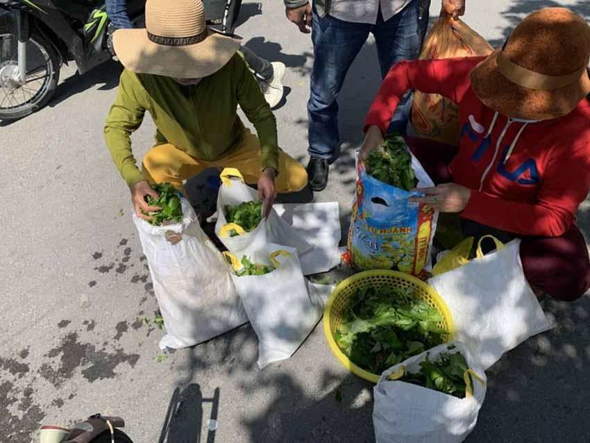 Đi tìm món rau 'gây tò mò''ở Cù Lao Chàm - 5
