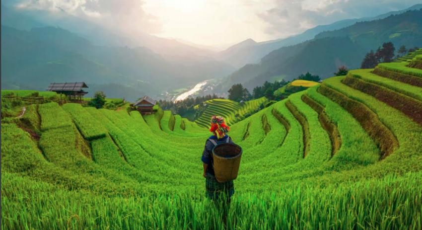 Việt Nam đứng thứ 2 khu vực về tiềm năng phục hồi ngành nông nghiệp thực phẩm - 1