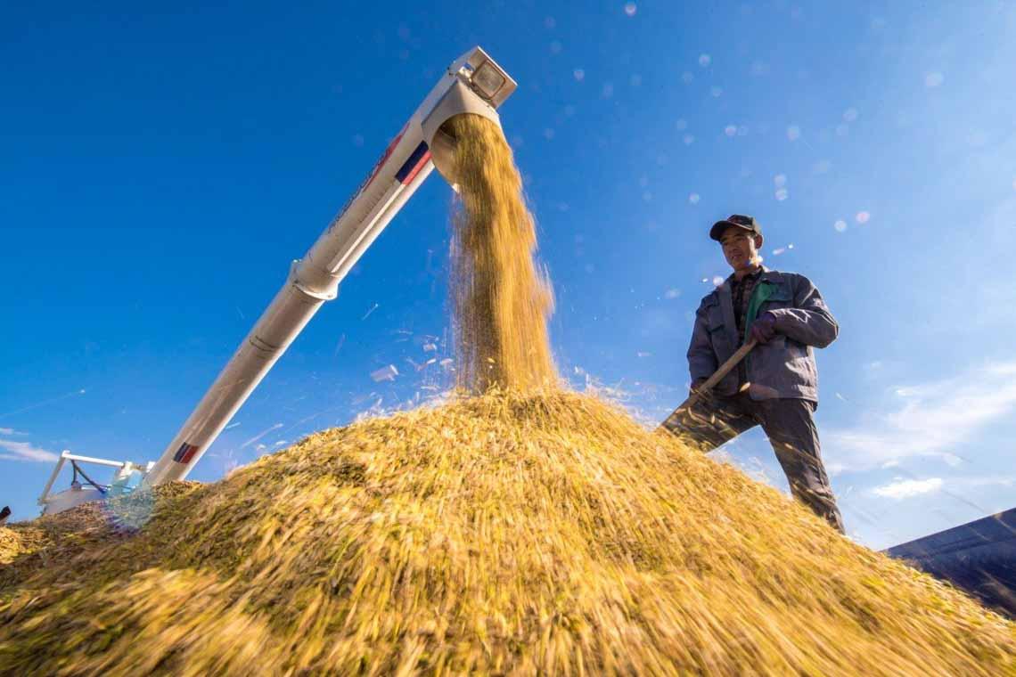 Suy ngẫm: Người nông dân thông minh - 2