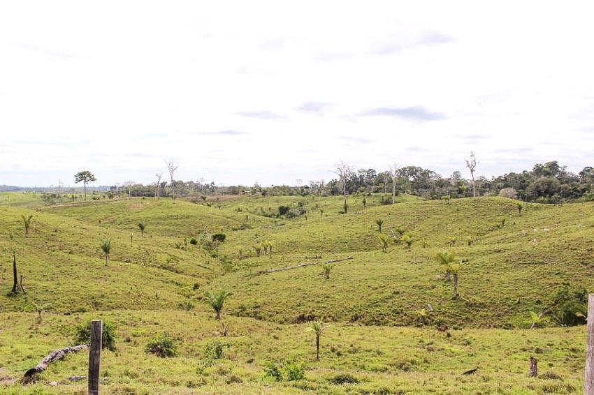 Dòng sông nước sôi 97oC trong rừng mưa Amazon - 8
