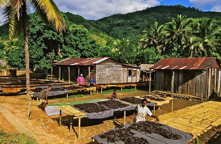 Hòn đảo sản xuất 80% vani cho thế giới - 1