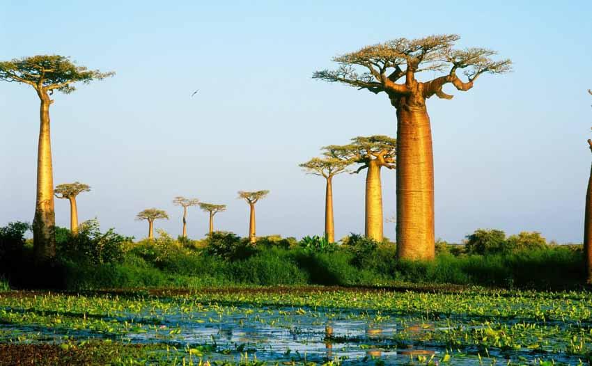 Hòn đảo sản xuất 80% vani cho thế giới - 12