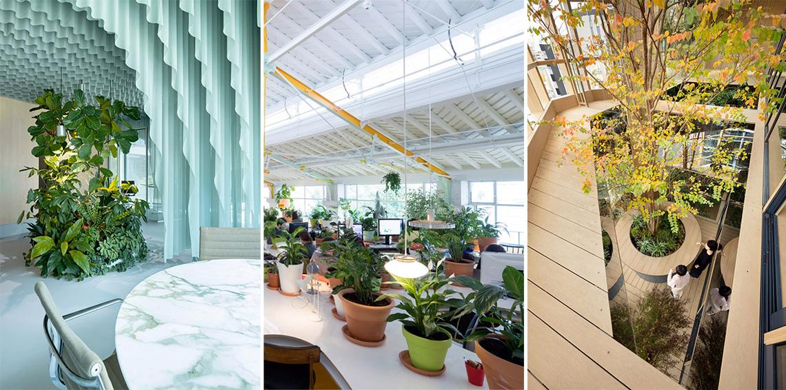 Khám phá mười nội thất văn phòng không gian xanh - 11