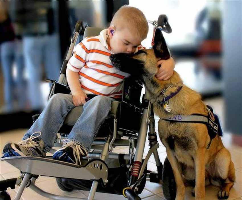 10 điều kỳ diệu mà chó có thể cảm nhận - 3