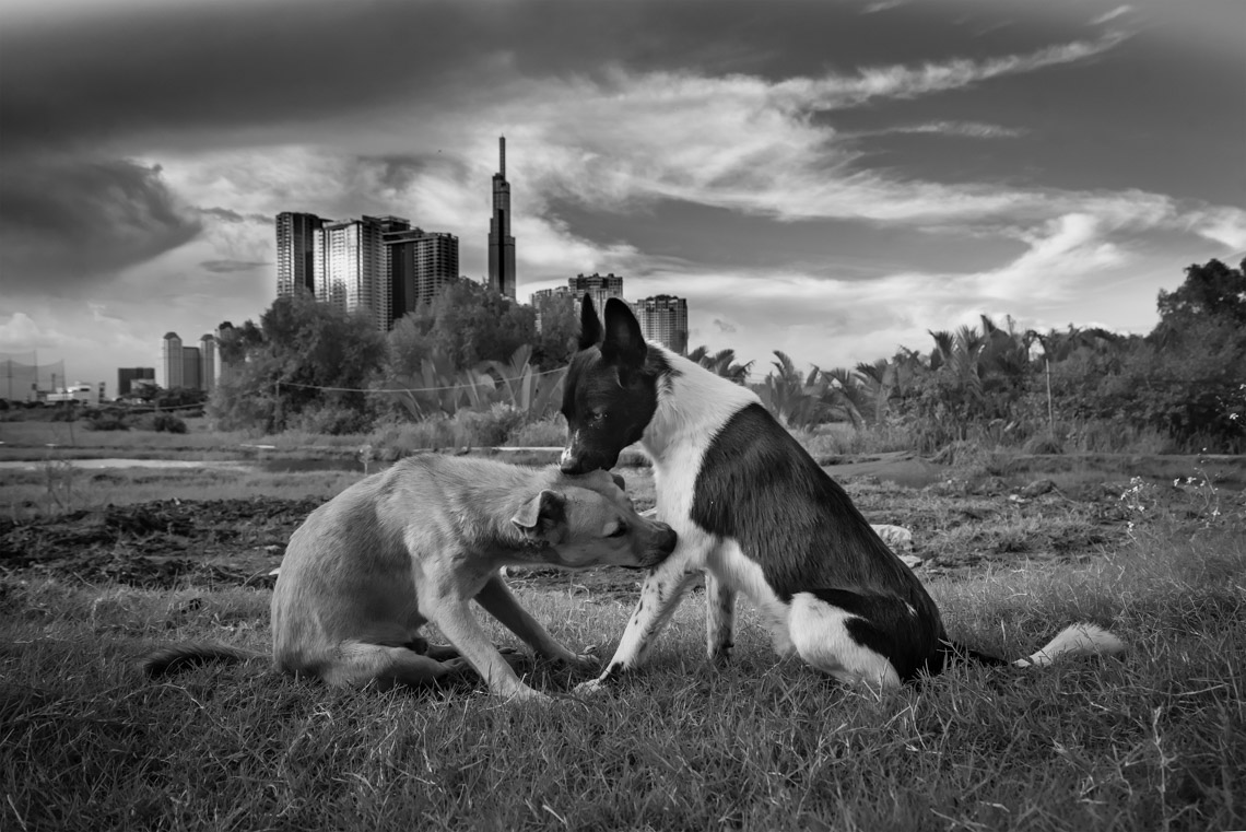 Nhiếp ảnh gia Hoàng Thế Nhiệm khám phá nơi trú ngụ của một gia đình chó