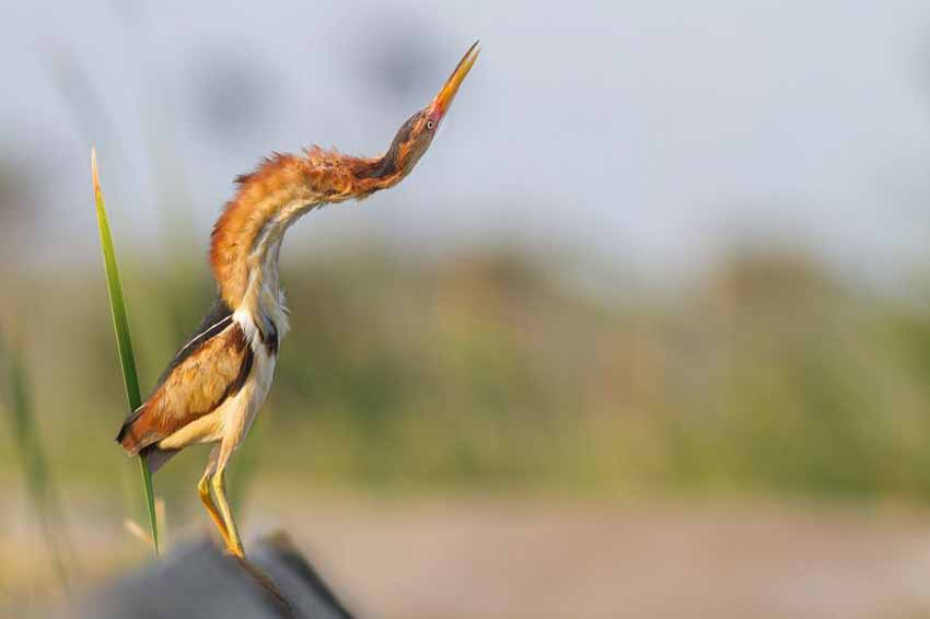 Những bức ảnh chim làm cho người ta thổn thức - 1
