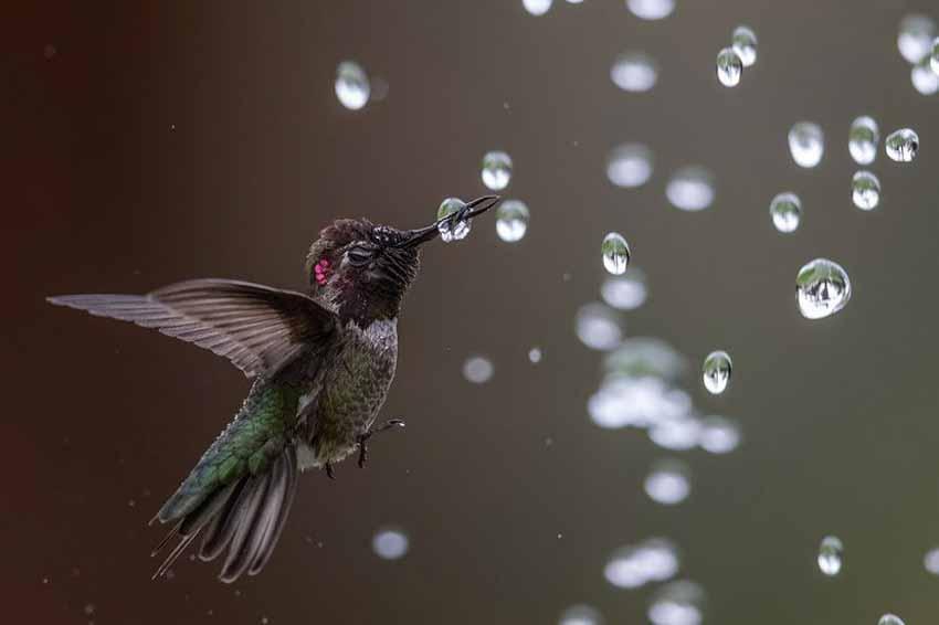 Những bức ảnh chim làm cho người ta thổn thức - 2