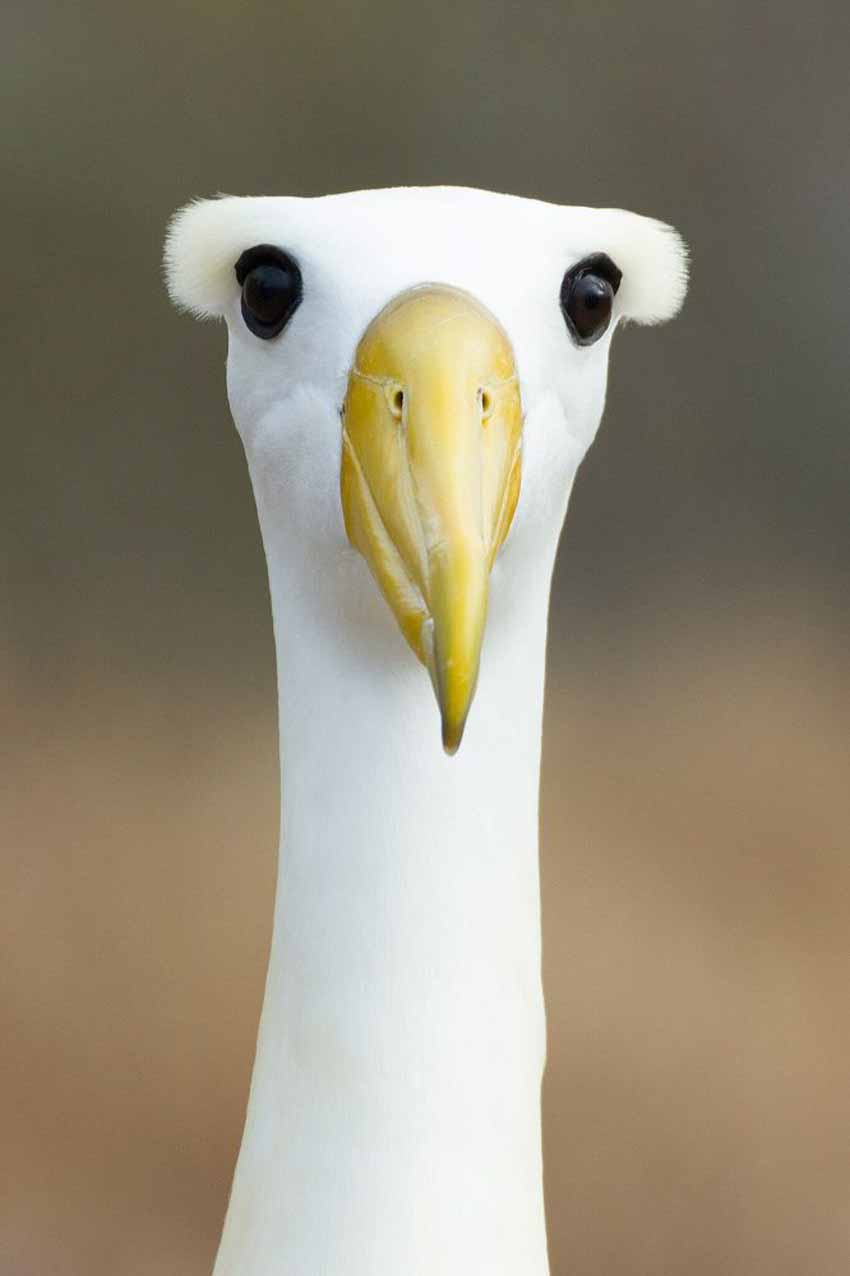 Những bức ảnh chim làm cho người ta thổn thức - 4
