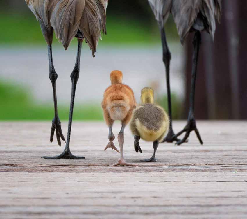 Những bức ảnh chim làm cho người ta thổn thức - 5