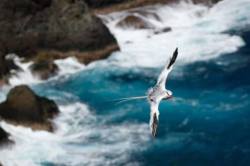 Những bức ảnh chim làm cho người ta thổn thức - 11