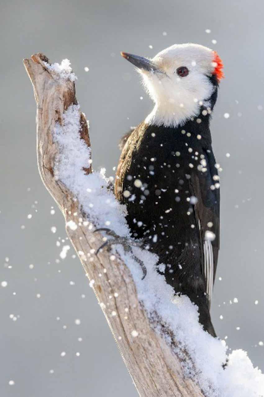 Những bức ảnh chim làm cho người ta thổn thức - 13