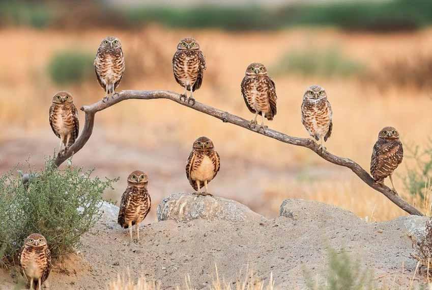 Những bức ảnh chim làm cho người ta thổn thức - 14