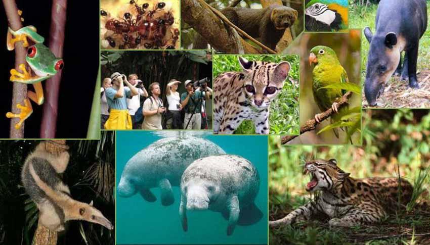 Ghé Belize, 'viên ngọc của vùng Trung Mỹ' - 5